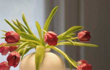 Saksijsko i sobno cveće cvećara Orhideja